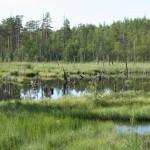 81 болото